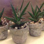Kleine Pflanze Geschenkartikel