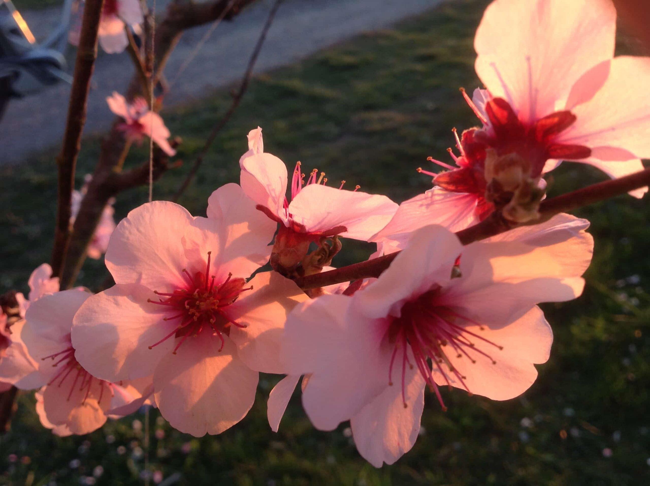 Blumen Magnolia Foto 22.03.20, 18 27 25