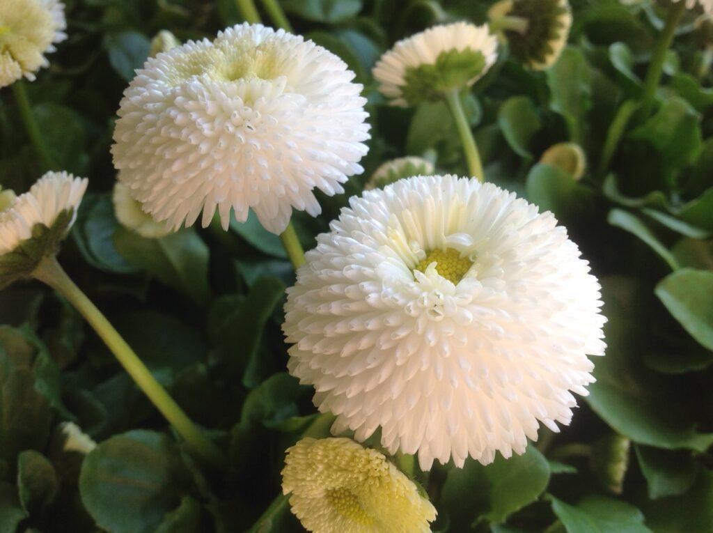 Frühling Blumen Magnolia_1